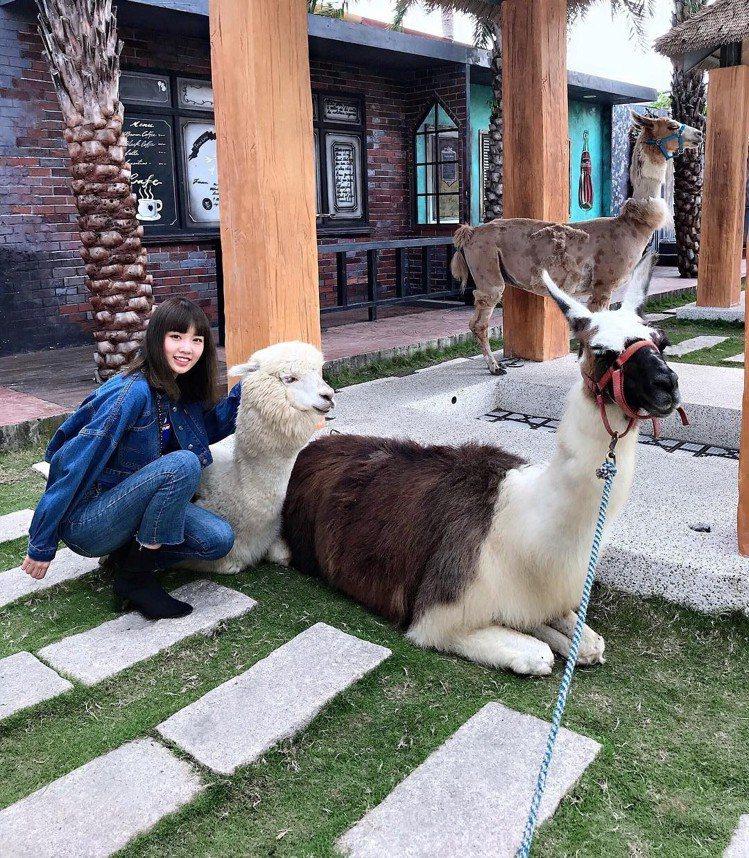 圖/可以跟溫馴草食動物們合照。網友melody860702授權。