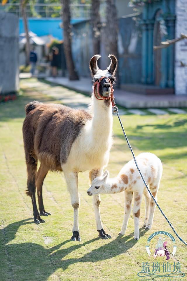 圖/超可愛的溫馴草食動物。擷取自粉絲團。