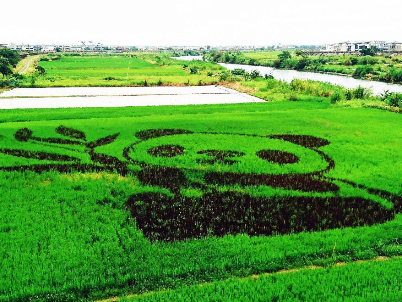 宜蘭縣壯圍鄉公所去年推出彩繪稻田,稻田裡長出貓熊,今年則是企鵝家族。本報...