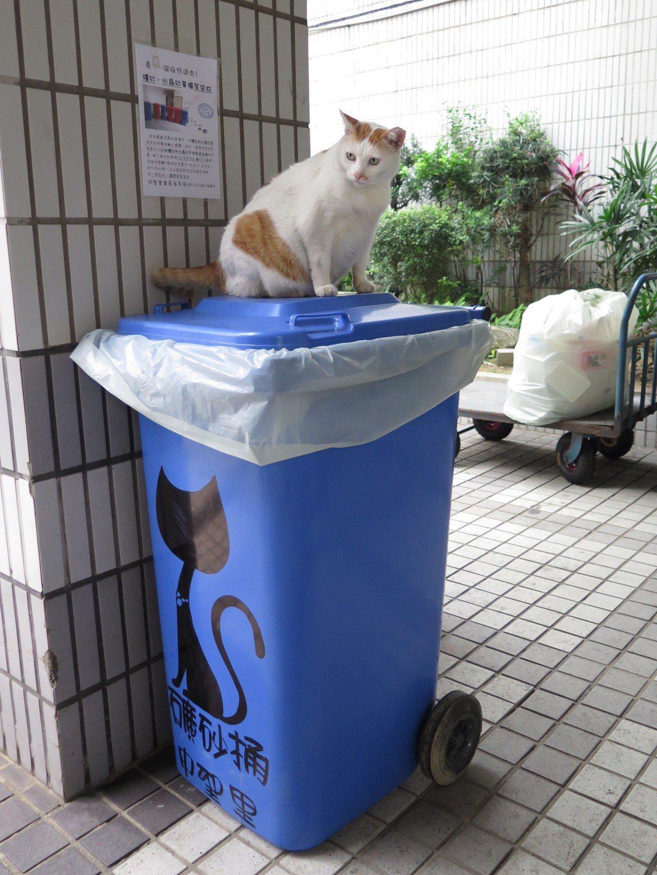 因作為貓砂的礦砂或水晶砂無法焚燒,也易造成垃圾車軸心損壞,桃園區清潔中隊在桃園區...