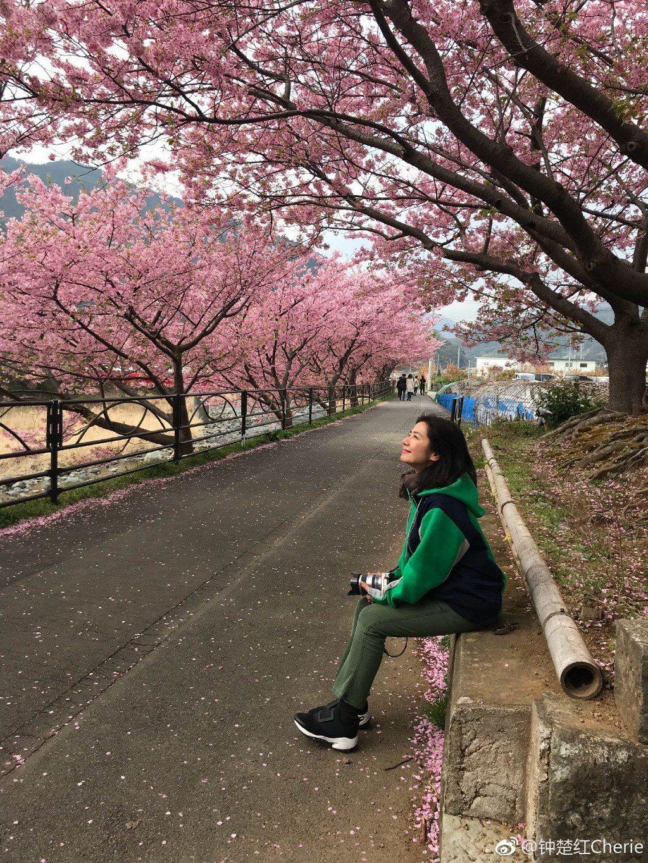鍾楚紅上個月到日本賞櫻,留下倩影。圖/摘自微博