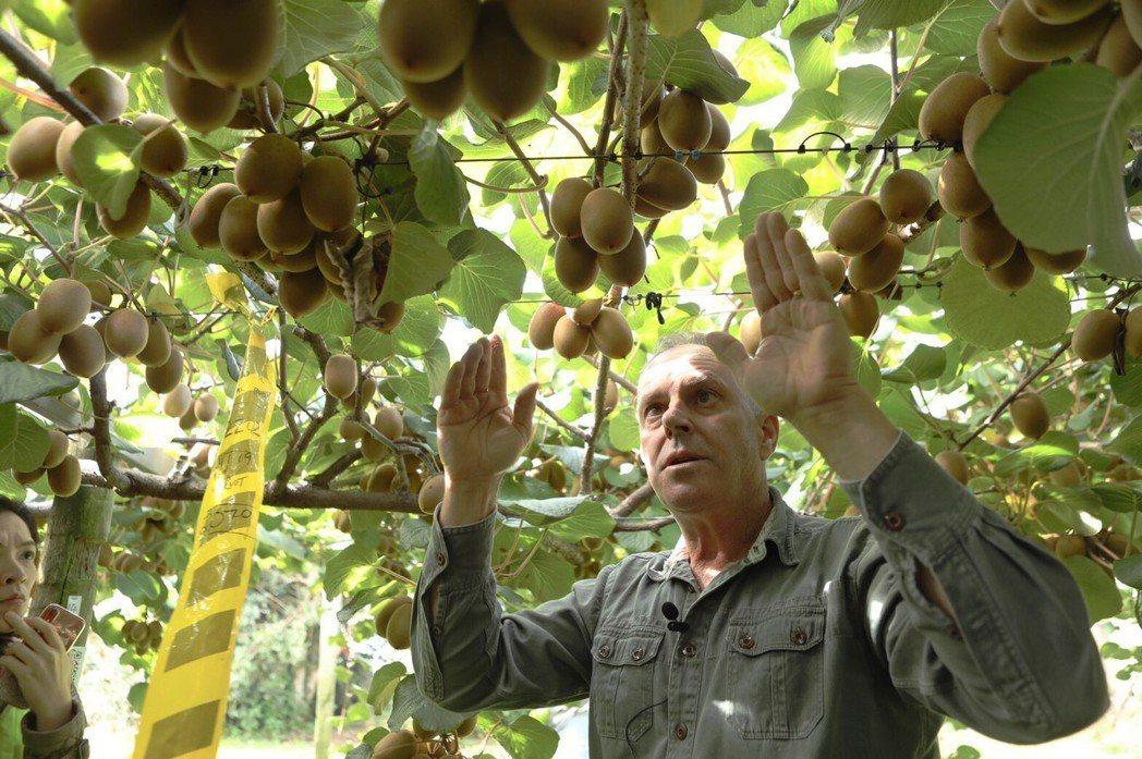 奇異果果農用心分享栽種奇異果的成功秘訣。 Zespri /提供