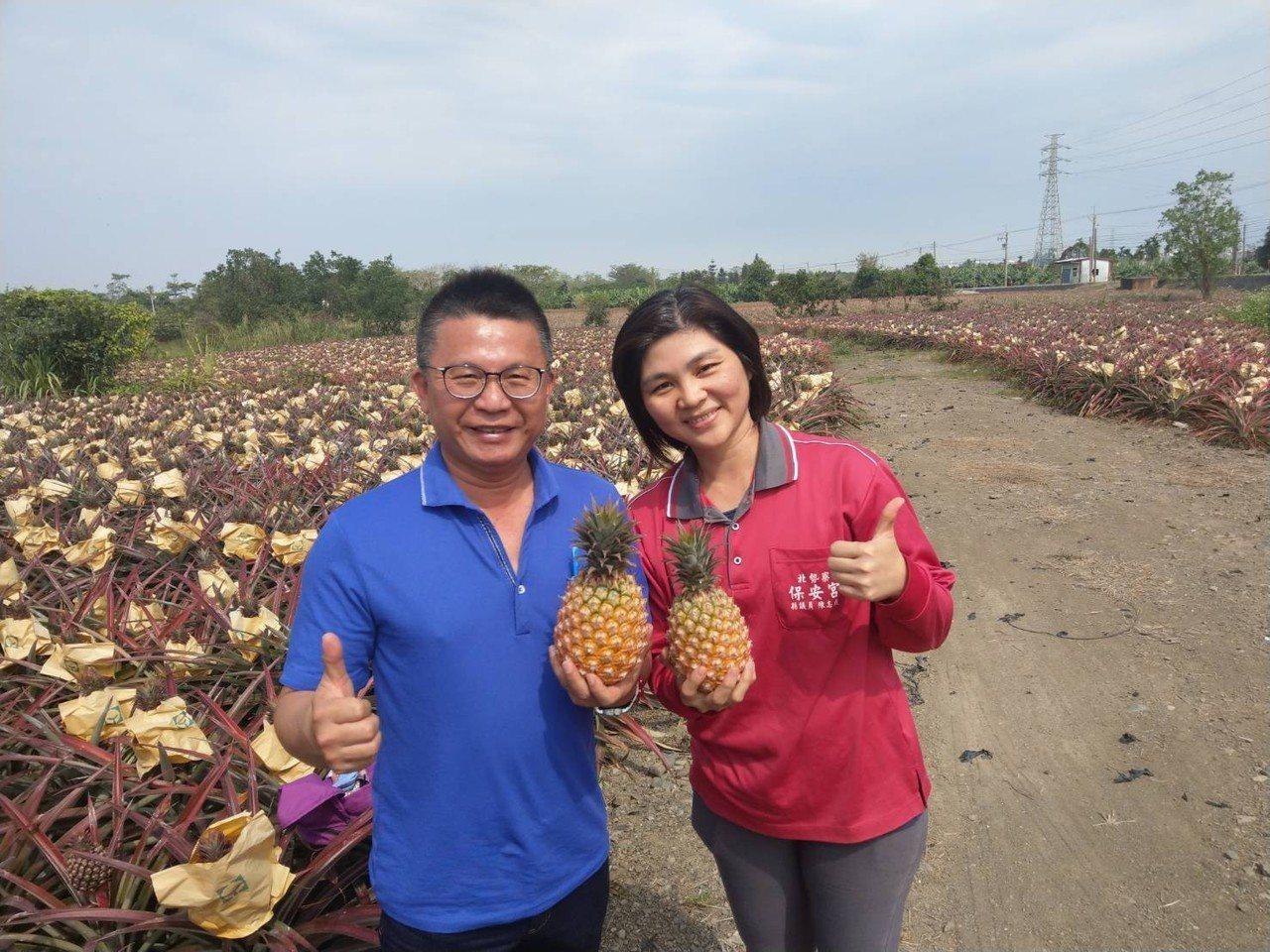 目前正逢鳳梨產季,正是吃鳳梨的時候。圖/農糧署南區分署提供