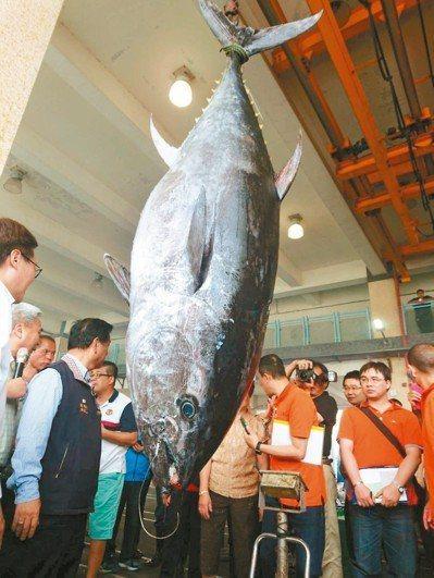 去年宜蘭第一鮪在南方澳第三漁港拍賣,重達211公斤,每公斤9000元,賣得189...