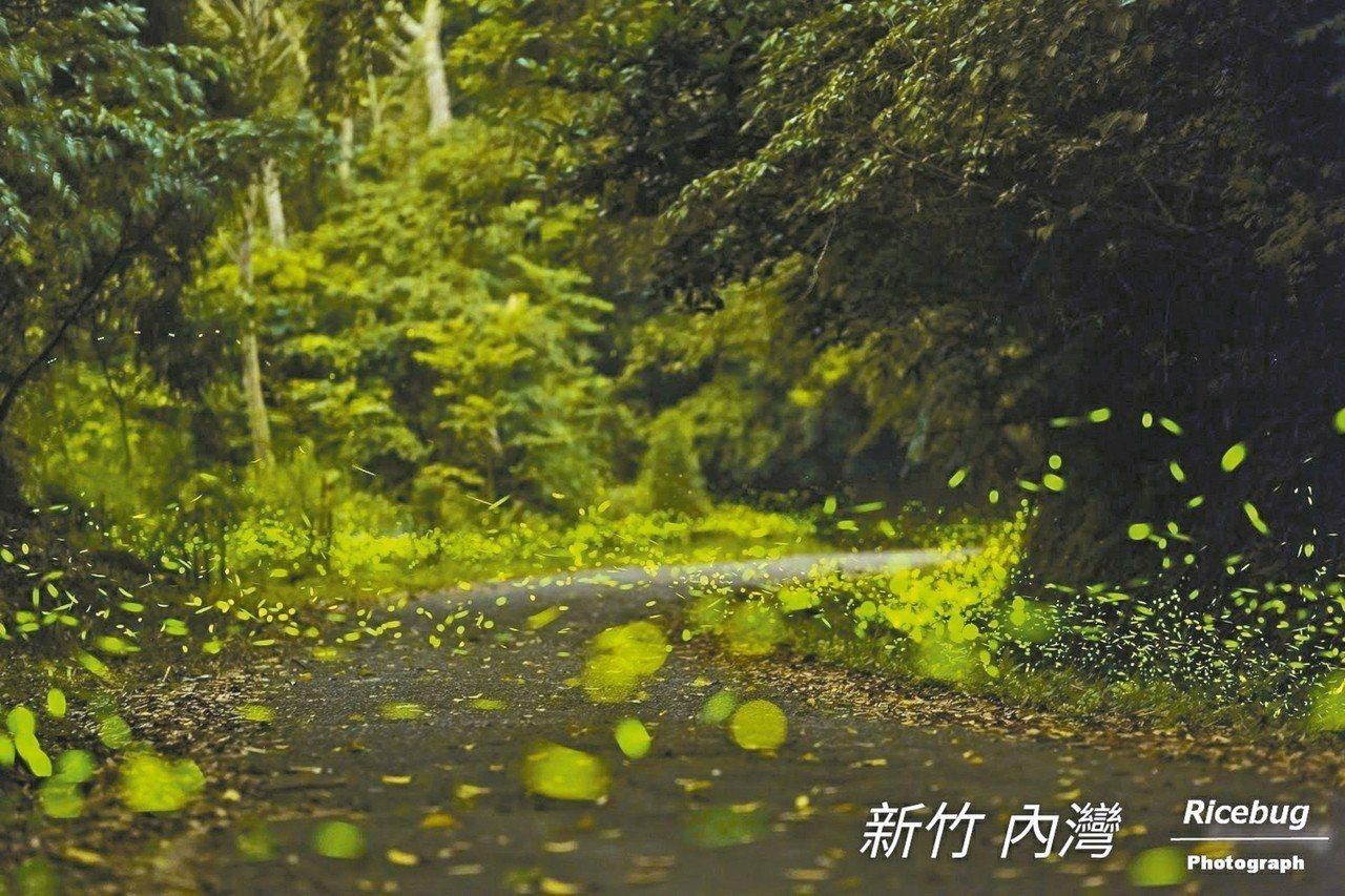 新竹縣內灣東窩野溪螢火蟲季17日登場。 圖/內灣形象商圈發展協會提供