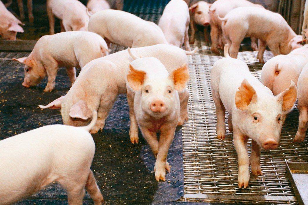現代化養豬場多配備負壓水簾密閉豬舍、糞尿分離系統,努力打造無臭、衛生環境。有些豬...