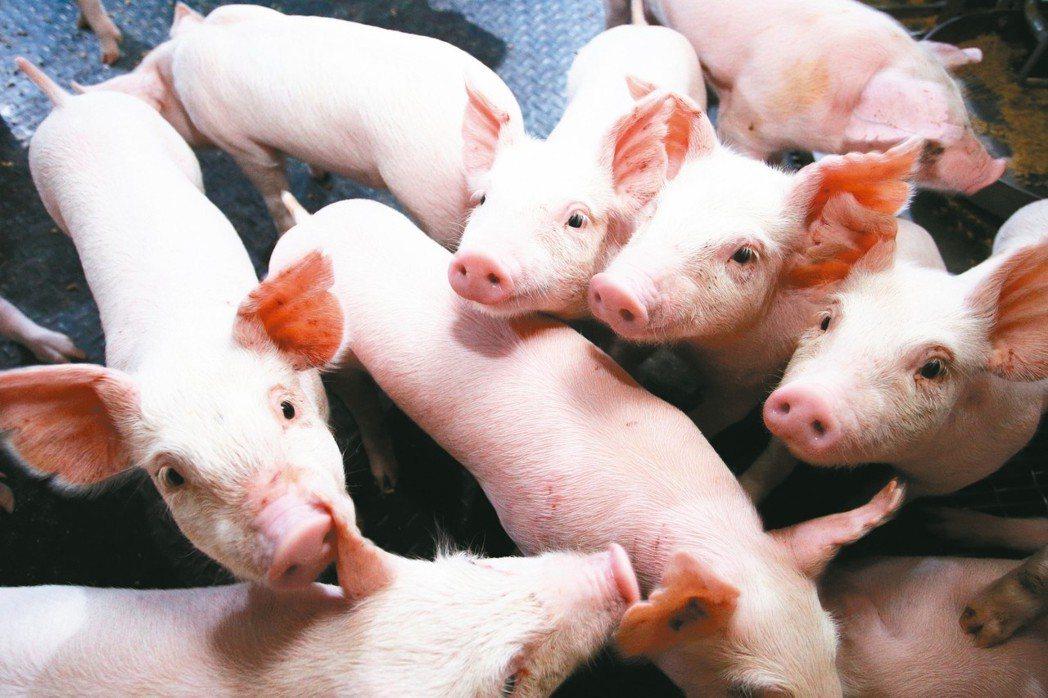 就盼豬事大吉適逢豬年,聯合報願景工程呼籲全民守護台灣養豬產業,免受來自大陸非...