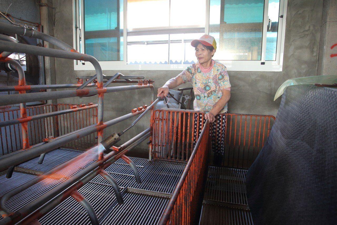 現代豬舍所有設備不僅要定期噴灑消毒水,還得用高溫火槍殺菌。記者鐘聖雄/攝影