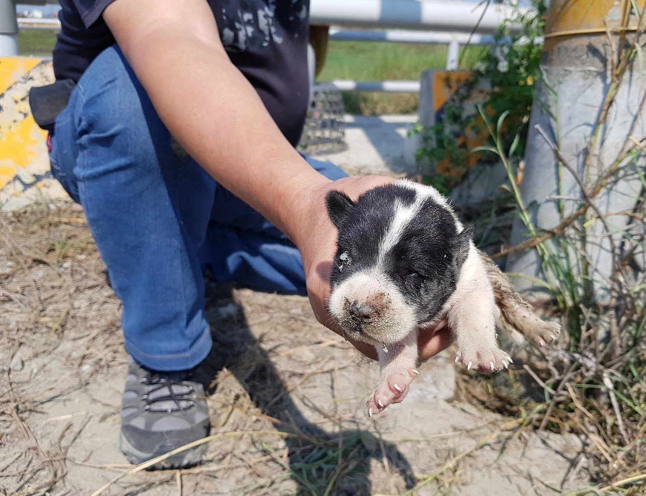 動物救援小組人員前後共花了將近一個小時,才終於將卡在電線桿下方的幼犬成功救出。圖...