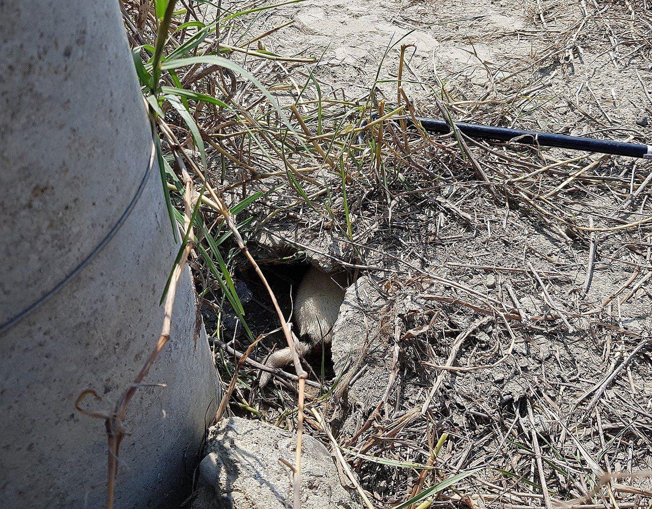 台灣動物緊急救援小組大隊長倪兆成發現,從電桿下方的水泥縫隙中,傳來受困小狗微弱的...