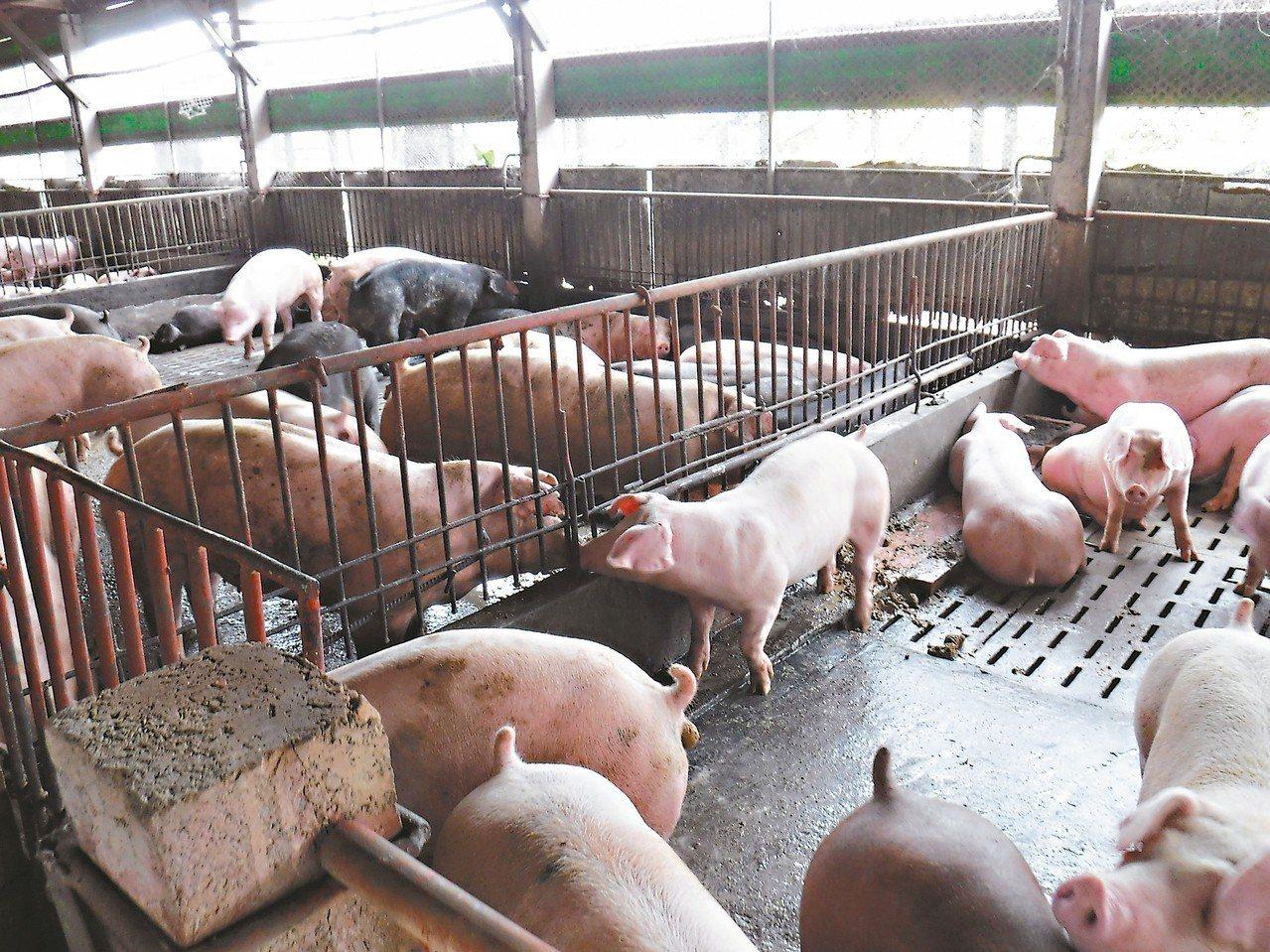 桃園防治豬瘟,未通過廚餘檢核的養豬場月底前開罰。 圖/桃園農業局提供