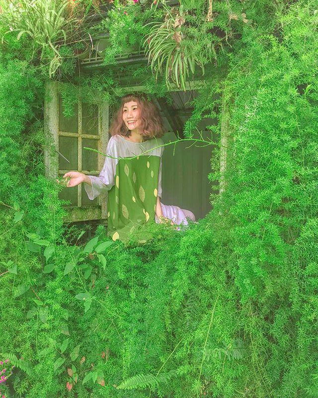 圖/充滿綠意的窗台,拍照起來充滿活力的綠精靈。網友zora.taiwan授權