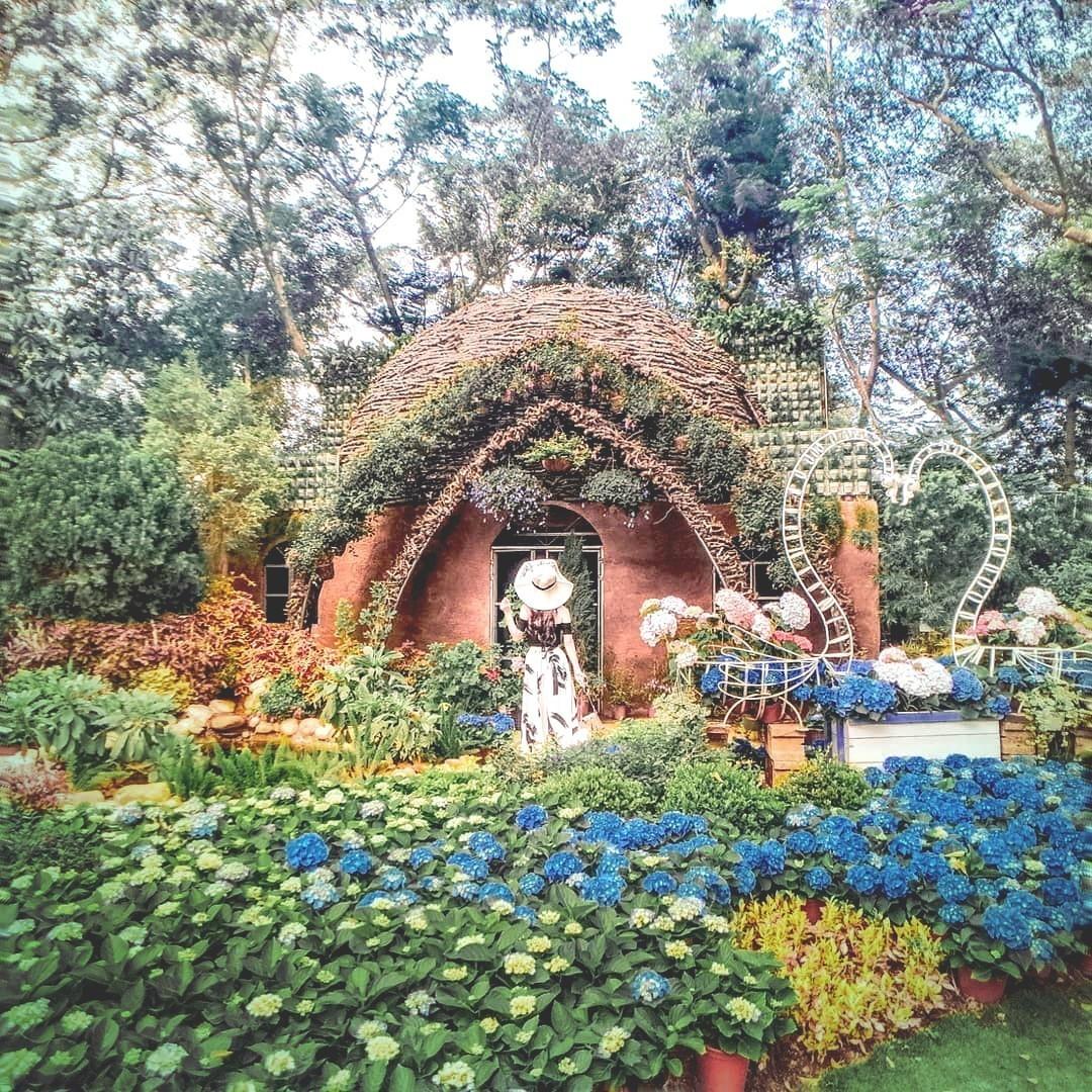 圖/童話小屋前繡球花盛開。網友lizlaichun授權