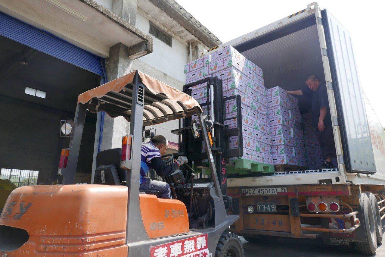 高雄內門農會已出口1250箱鳳梨到新加坡。圖/高雄市農業局提供