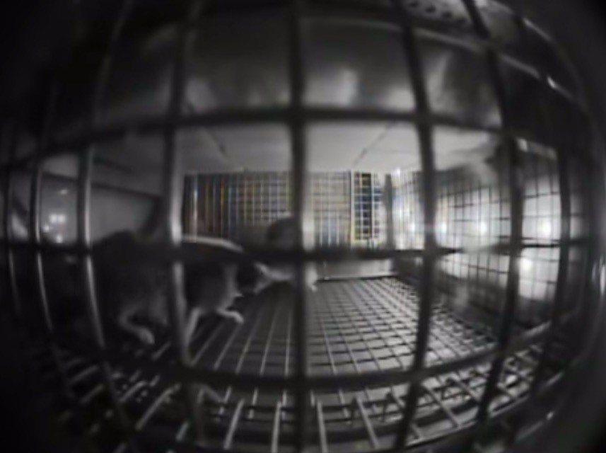 美國太空總署(NASA)將小老鼠送上國際太空站研究低重力環境對物種的影響。翻攝自...