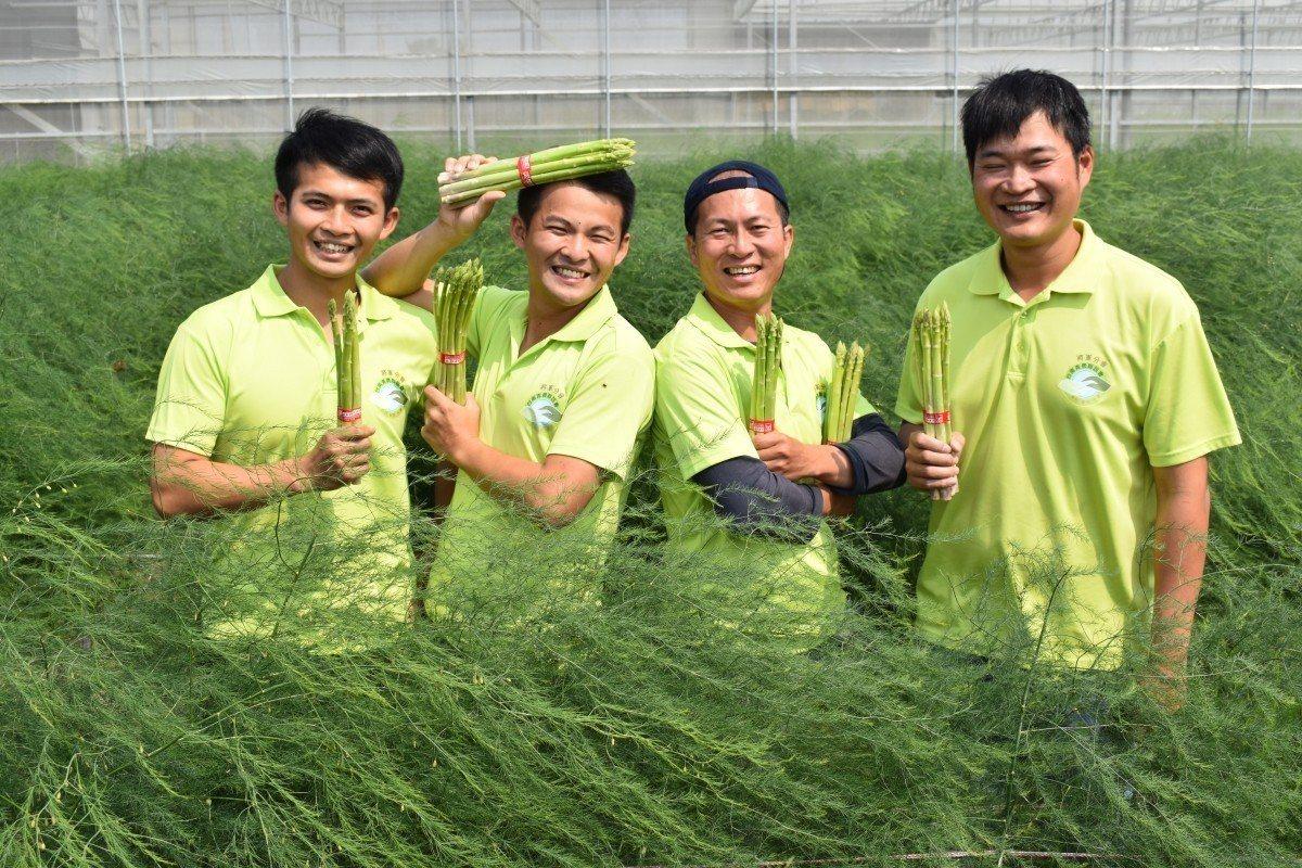 今年暖冬國產蘆筍提早上市。農委會台南農改場/提供
