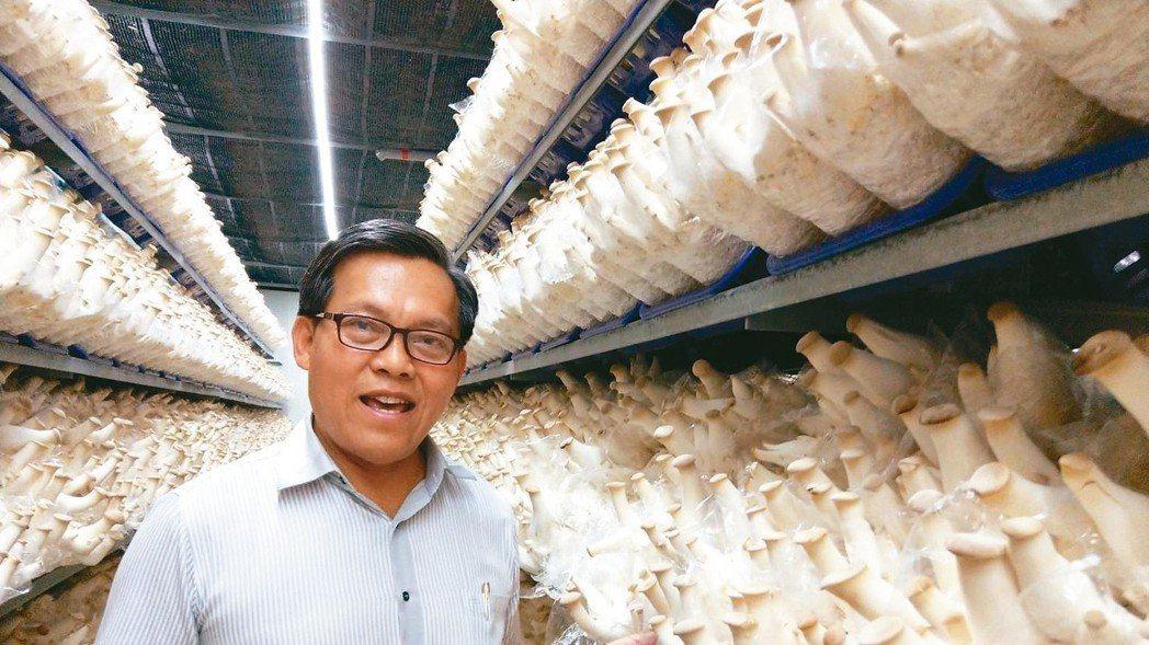 屏東縣竹田鄉農友王朝欽,在太陽能面板下建溫室種杏鮑菇,創造幾乎是全國單場最大的杏...