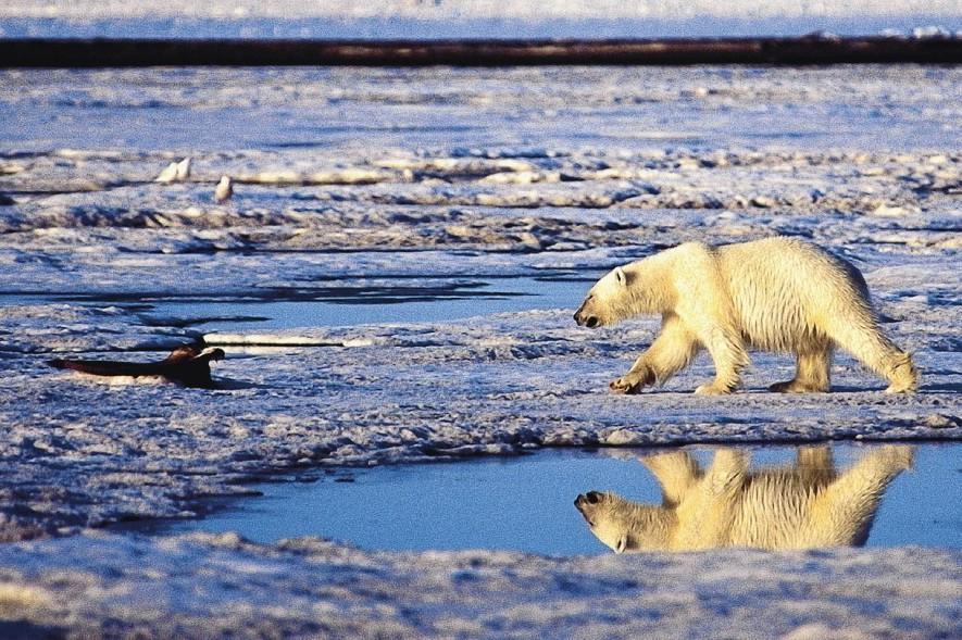 物種多樣性危機/第六次大滅絕即將到來?