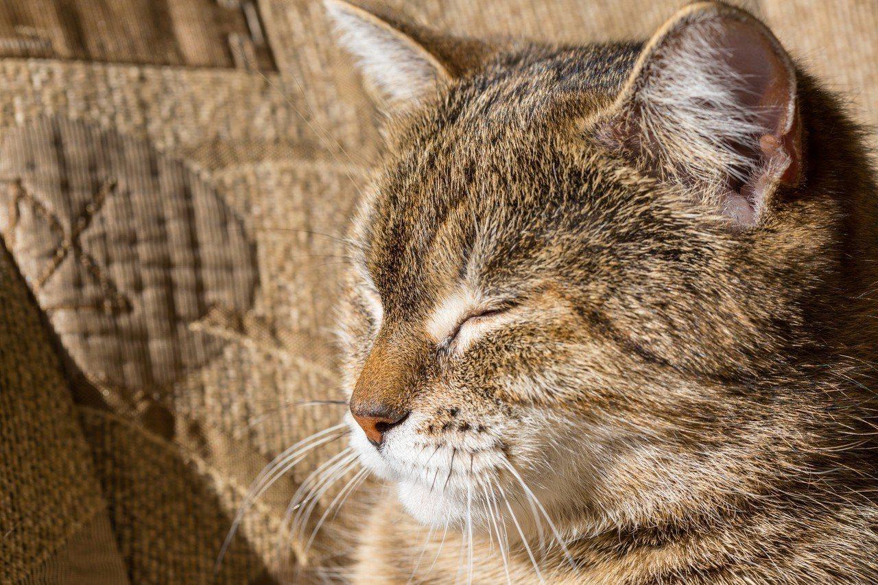 報告說,和大門不出二門不邁的寵物貓相比,在戶外趴趴走的寵物貓,感染病原體或寄生蟲...