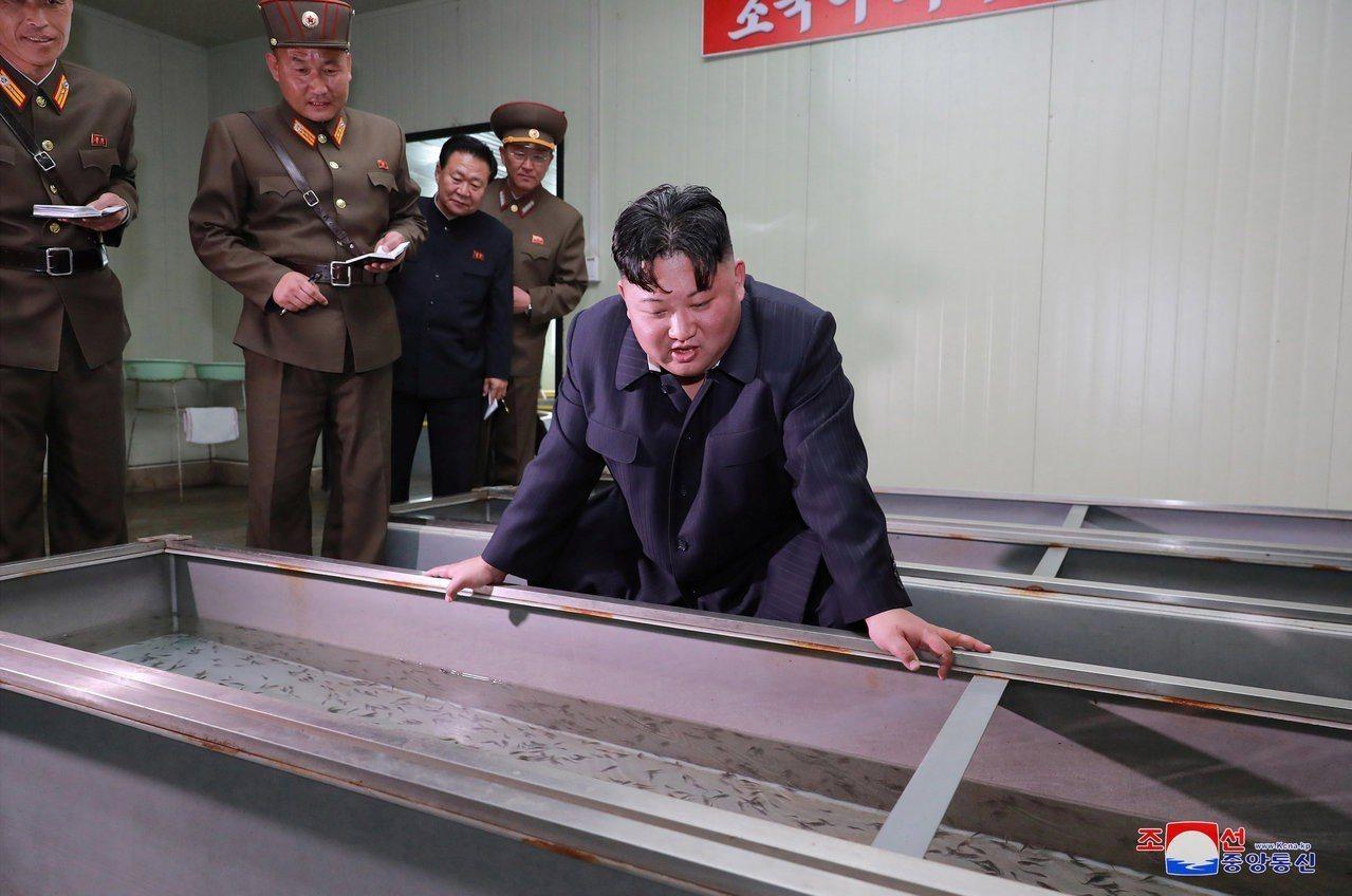 北韓領導人金正恩16日視察新昌養魚場。路透