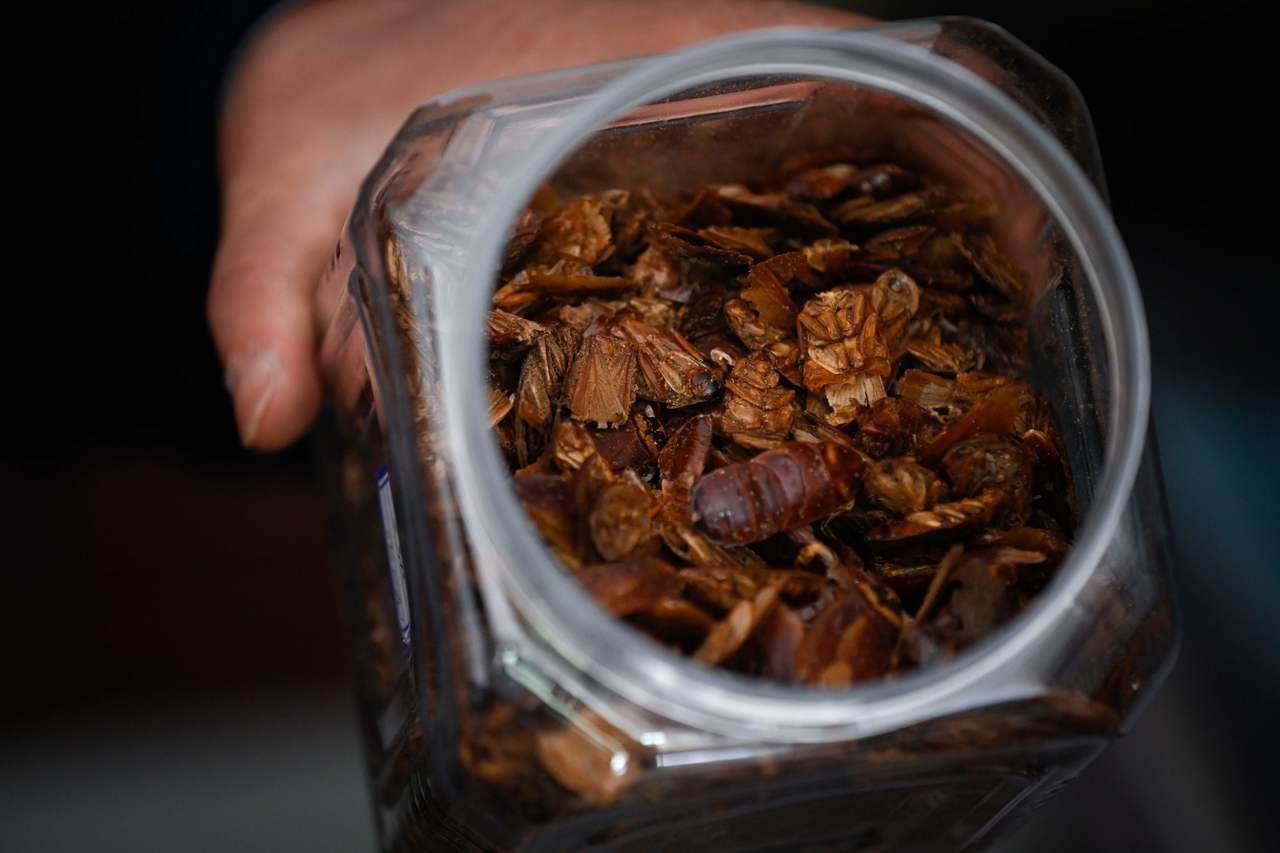 雖然主要收入來源其實是將蟑螂直接出售給養殖場或藥廠,但李兵才也熱衷於找當地餐廳合...