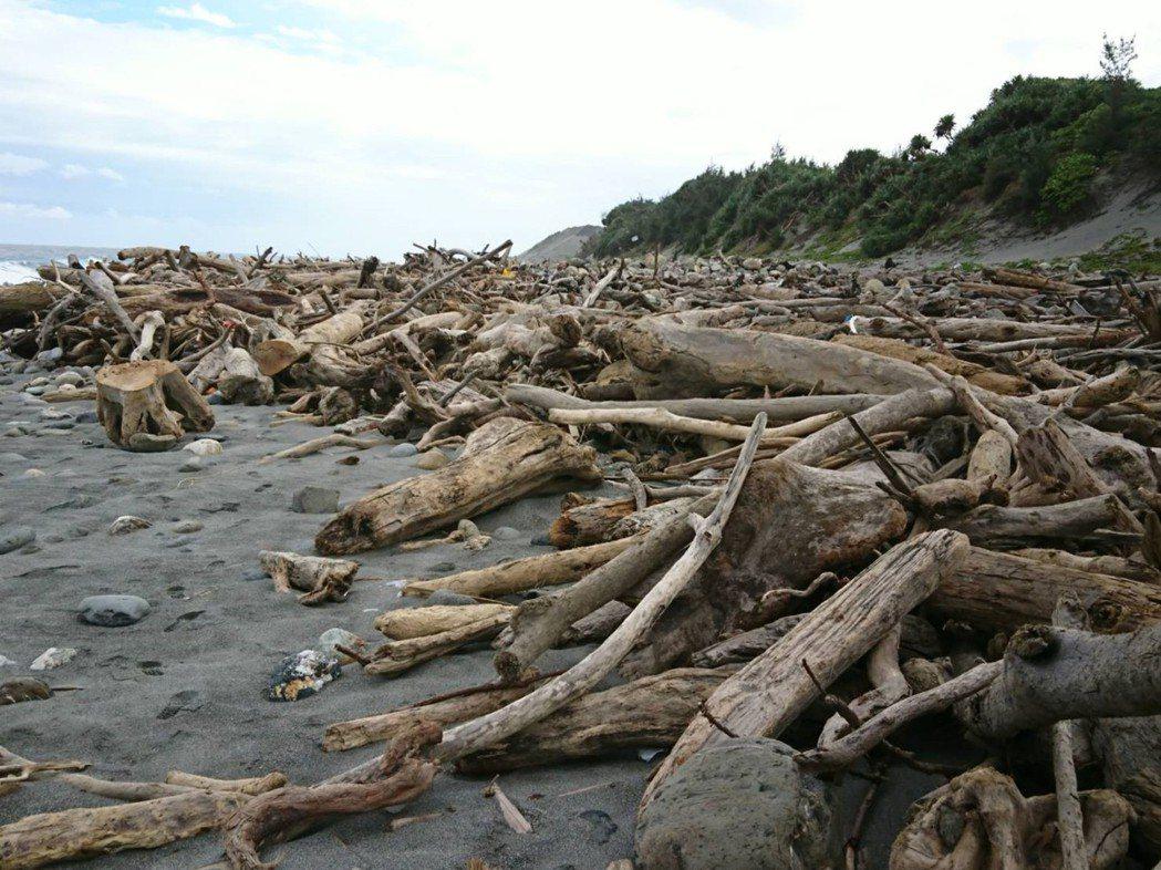漂流木堆積海岸。圖╱台東林管處提供