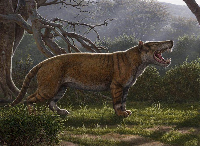 古生物學家挖出名為Simbakubwa kutokaafrika(班圖語,非洲巨獅之意)的新物種下顎、牙齒與部分骨骼。 法新社