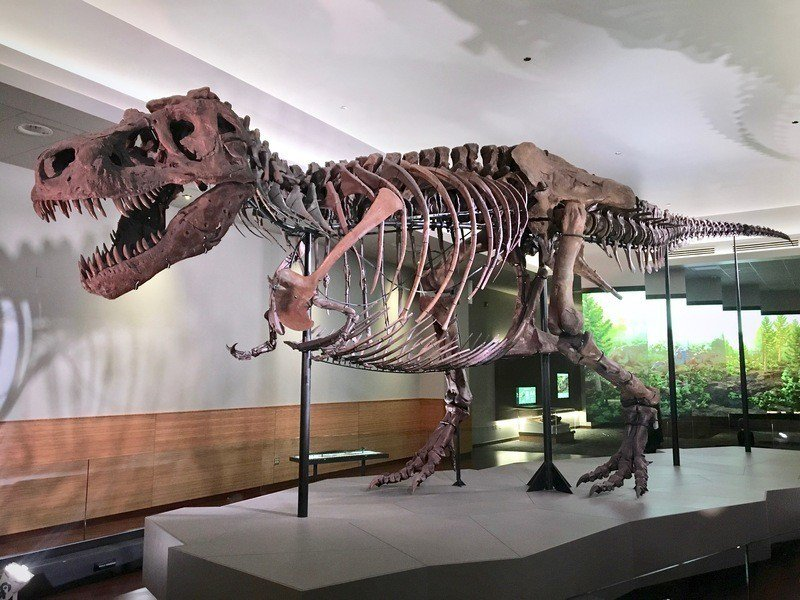 美國近日有化石獵人將珍貴幼體暴龍化石放到網站拍賣,古生物學家批評這樣的行為無助科...