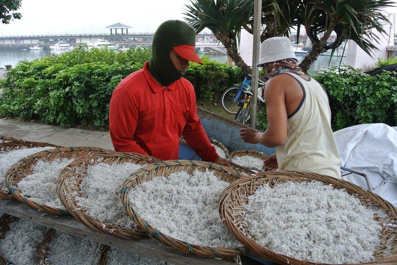 新北市政府每年編列經費,以每船10萬元向漁民收購魩鱙漁業經營權,自2009年至今...