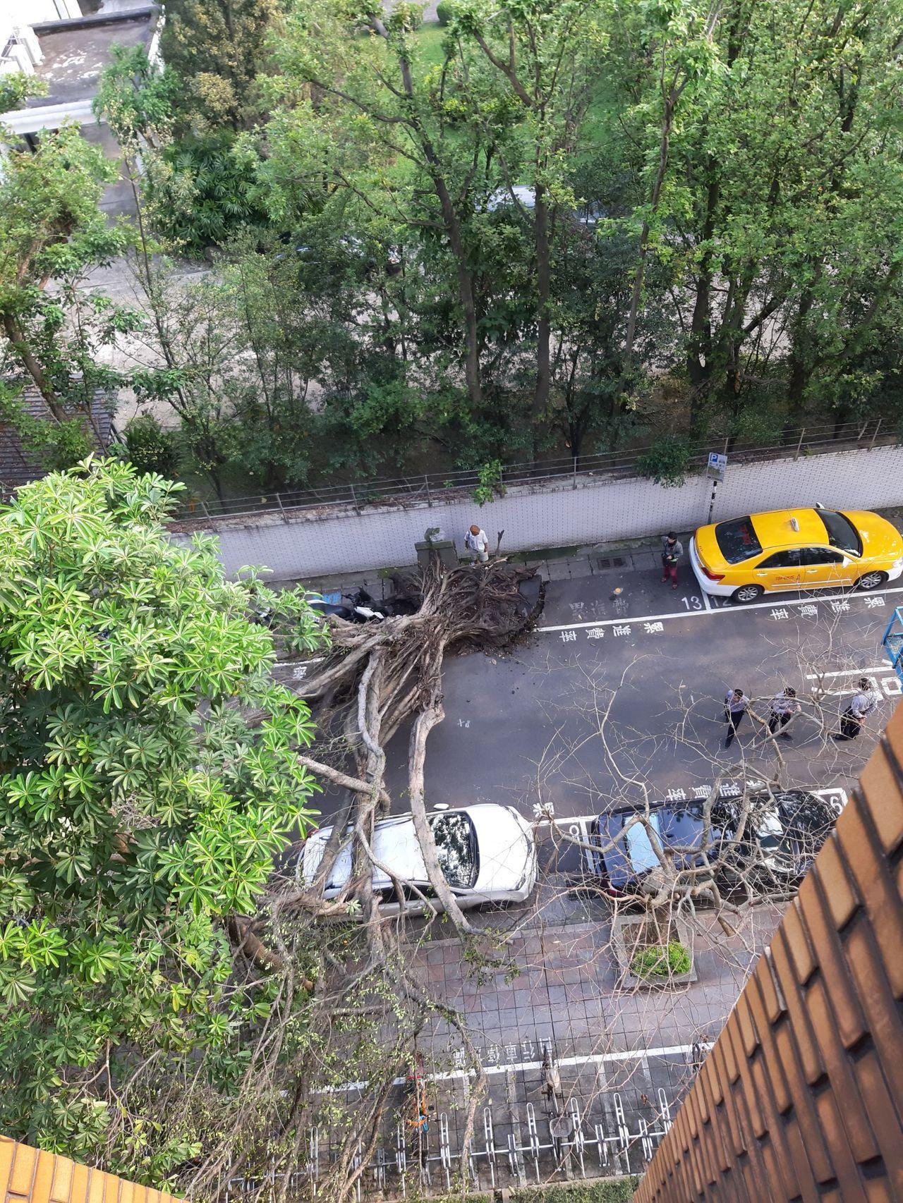 地震後,下午4點20分許,台北地檢署旁一棵樹木倒塌,壓住一輛休旅車。圖/民眾提供...