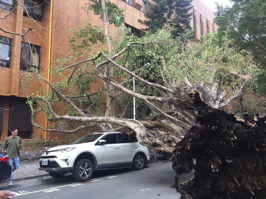 地震後,下午4點20分許,台北地檢署旁一棵樹木倒塌,壓住一輛休旅車。記者賴佩璇/攝影。