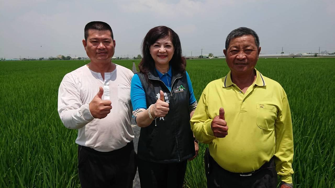 太保市農會總幹事黃麗貞(中),與有機米班長章居旺(右)、傅俊榮(左),稱讚台農8...