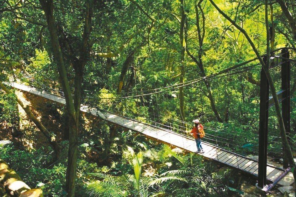 新北市三峽大板根森林遊樂區內有32.5公尺長的「彩虹吊橋」,是網美必拍點。 圖/...
