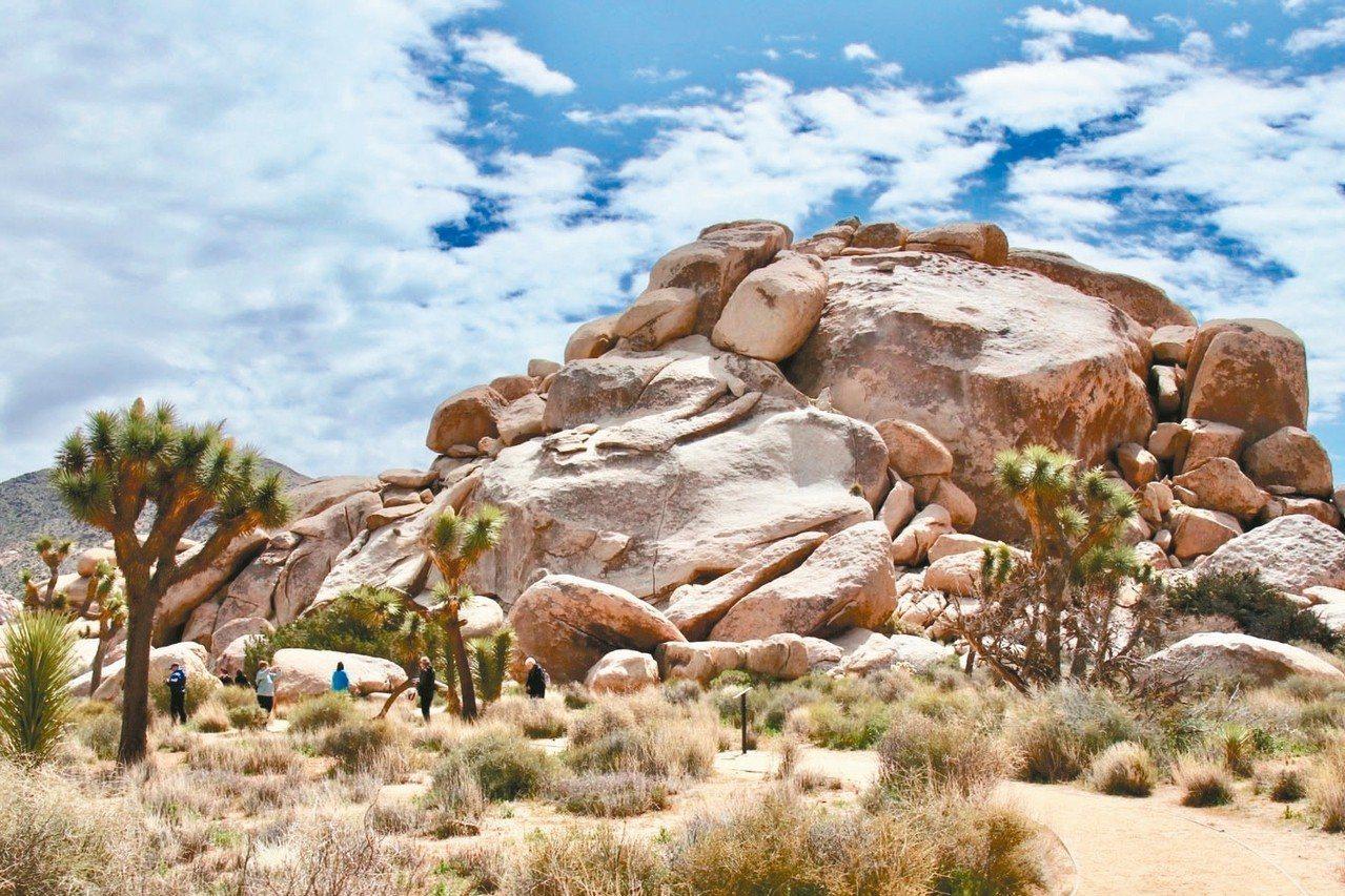 約書亞樹國家公園是一個沙漠保護區,有許多嶙峋怪石與沙漠植物群。 圖/游慧君、陳志...