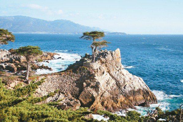 孤柏松(Lone Cypress)是「17哩路」上最著名的地標。 圖/陳志光、游...