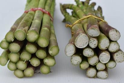 速挑第1招:新鮮綠蘆筍(左)基部切口呈鮮綠色,若產品缺乏保濕或放在儲架販售多日(...