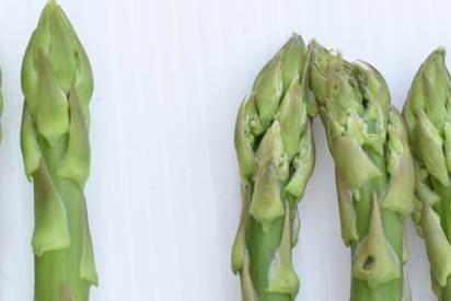 速挑第3招(A版):新鮮綠蘆筍(左1支)鱗片貼合且顏色翠綠或呈鮮粉紫,若產品保濕...