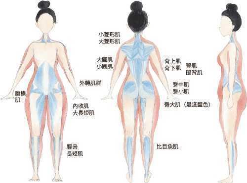 這張圖幫大家標示出必須鍛鍊的深層肌。平常因為疏於使用,我們會被外面的紅色區所代表...