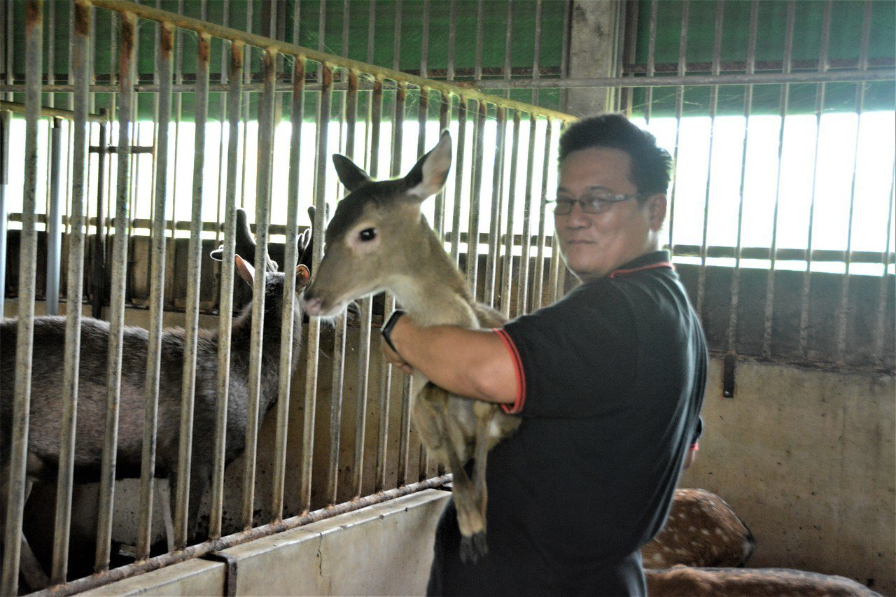 台南鹿農林昆鋒與小鹿感情相當好,他有個台灣鹿的夢。記者吳淑玲/攝影