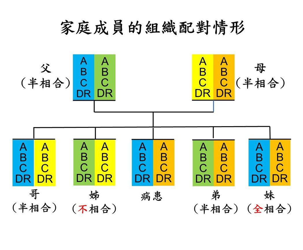 組織配對依據人類白血球抗原(HLA)基因型的相合情形,基因座落在第六對染色體(A...