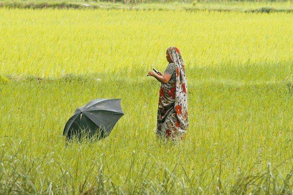 在印尼炙熱的太陽下,里斯瓦蒂正在檢驗她的作物。她並不是拿出紙和筆來記錄,而是用手...