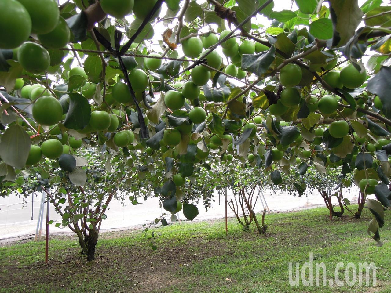 研究單位不斷研究新的品種,卻欠缺相對完善的植物品種保護機制,使得獲得授權的農民權...