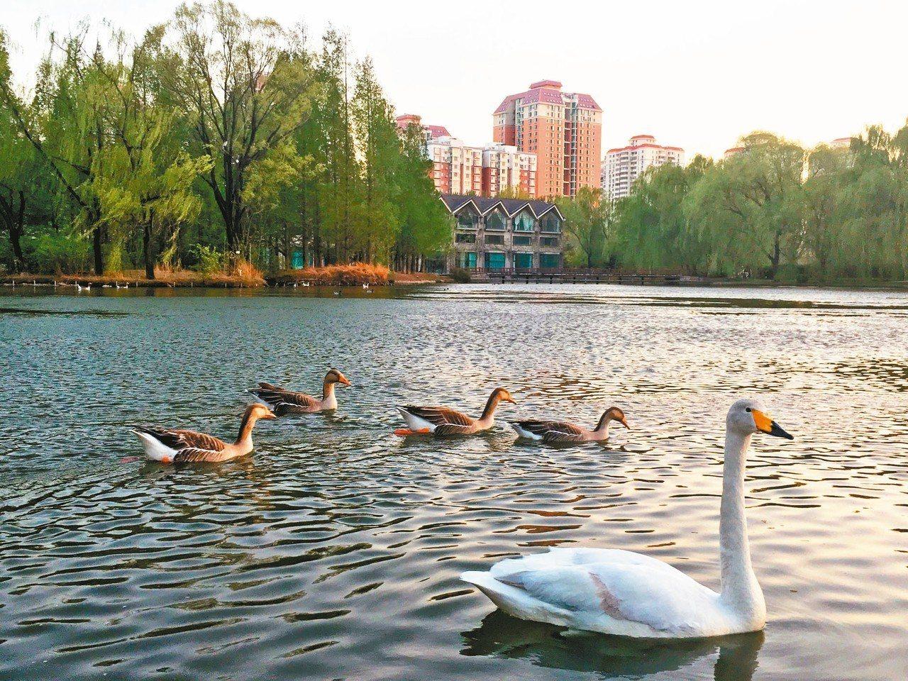 位在北京四環邊上的紫玉山莊。 特派記者林庭瑤/攝影
