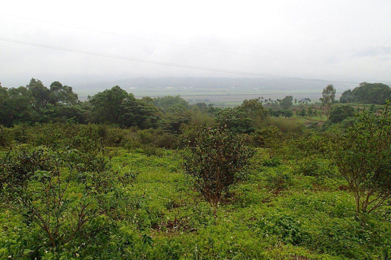 從竹林步道遠眺海岸山脈。記者余衡/攝影