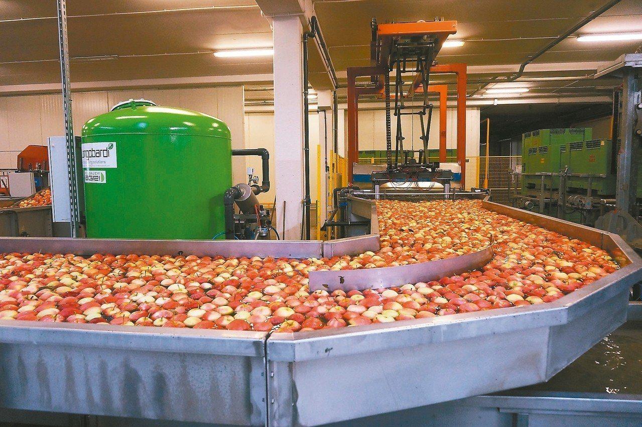 波蘭農產品以蘋果為出口大宗