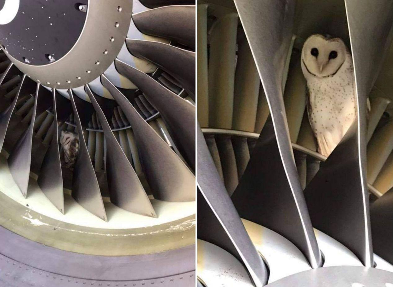 維珍澳洲航空18日於臉書粉專上傳了照片,可見一隻貓頭鷹正縮在飛機引擎的螺旋槳之間...