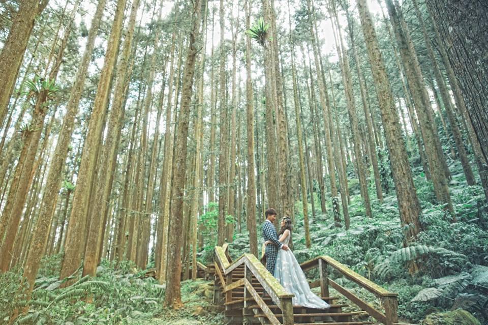 竹林是最受歡迎的拍攝景點之一。圖/阿里山管理處提供
