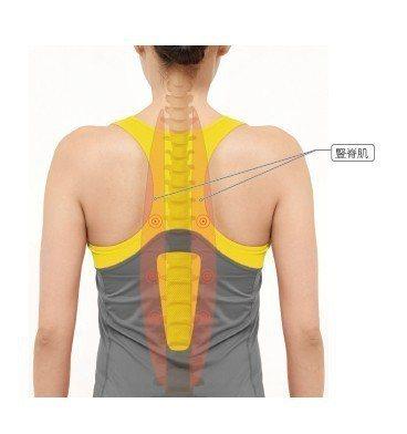 圖/摘自《深層核心肌群 科學鍛鍊運動》