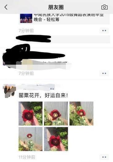 趙男將罌粟花的照片分享到網路,立刻遭到他人檢舉。圖片來源/大河網訊