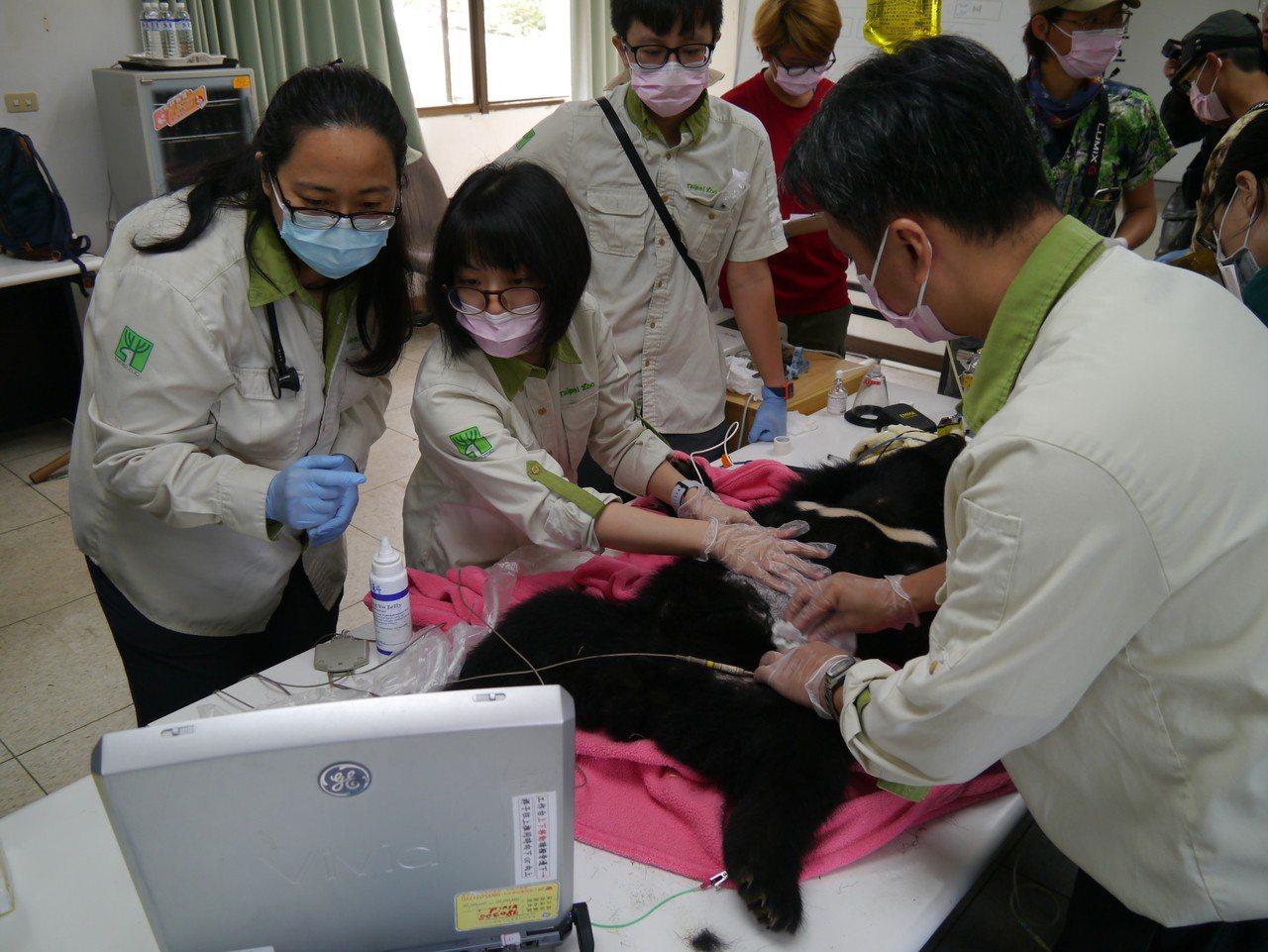 小熊健檢獸醫師團隊會診。圖/林務局提供